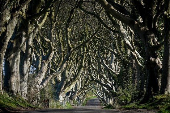Ravenhill Guesthouse : one of Roger's insider tips (the Dark Hedges near Ballycastle)