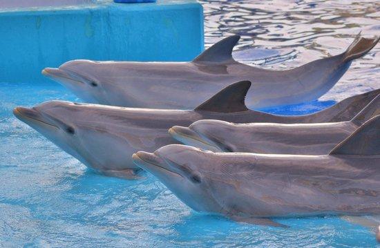 Oceanogràfic: Dolphin show