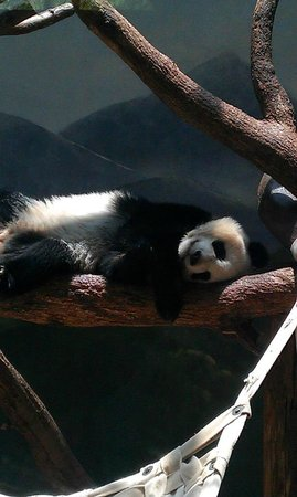 Zoo Atlanta : Loved the pandas!!
