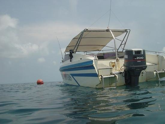 Dolphin Divers: The dive boat, everything taken care off.
