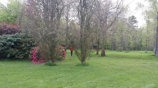 Beryl B & B : Lovely gardens in April, just before the bluebells come out.