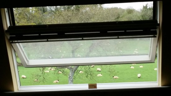 Beryl B & B : View from the Pepercorn room. Nothing better than waking up to the sound of sheep on a Saturday