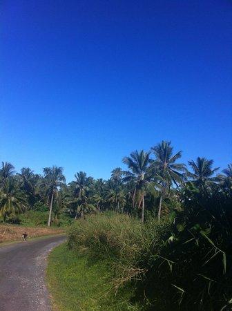 The Rarotongan Beach Resort & Spa : Paw paw trees
