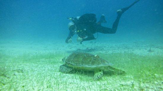 Sea Ventures Dive Center: TURTLES!