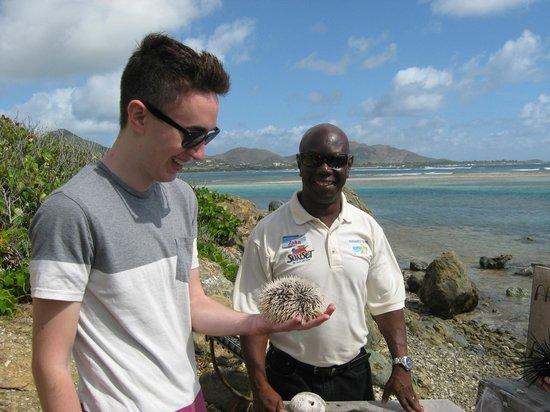 Bernard's Tours: Visiting the sea urchins