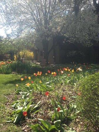 The Lancaster Bed and Breakfast: Beautiful Tulips