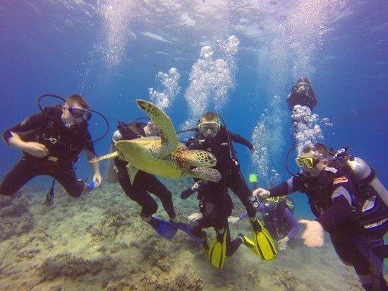 Oahu Diving : Fun Turtles