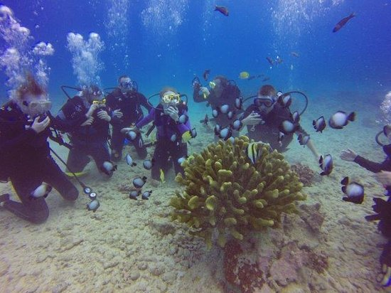 Oahu Diving : Cool fish & Coral