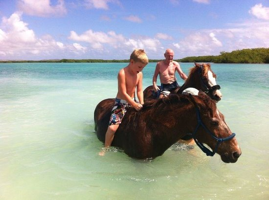 Horse Ranch Bonaire: Great swimming experience
