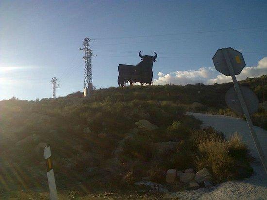 Hotel Magic Villa de Benidorm: The Benidorm Cow - On the journey approaching Benidorm
