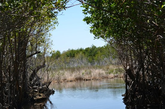 Everglades City Airboat Tours: Florida Mangroves
