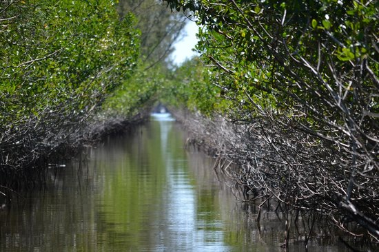 Everglades City Airboat Tours: Airboat tour of Mangroves