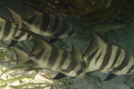 Casa Caracola : snorkeling