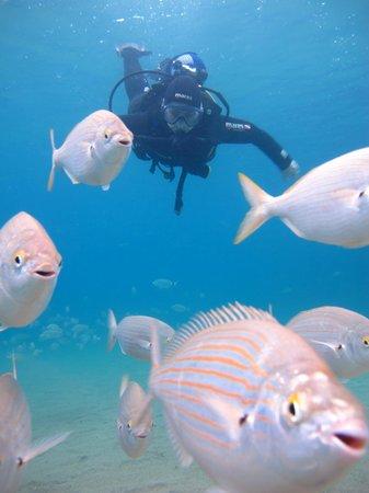 Atlantis Diving Lanzarote: que dire....... beautiful
