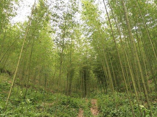 Moganshan Shambhala Residential Retreat: Amazing bamboo forest