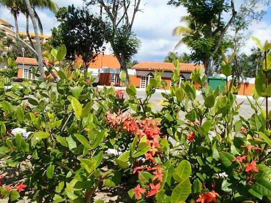 Sol Palmeras: El complejo de bungalows