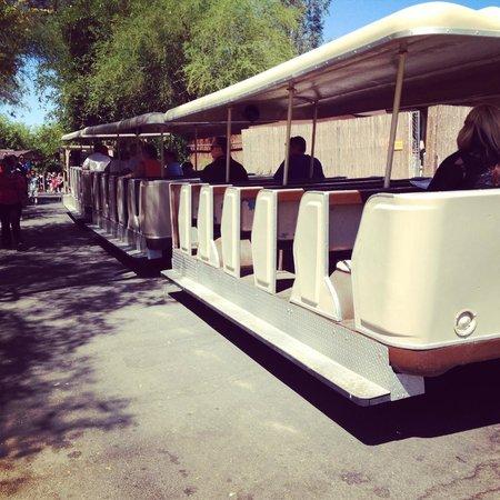 Phoenix Zoo : Tram tour available