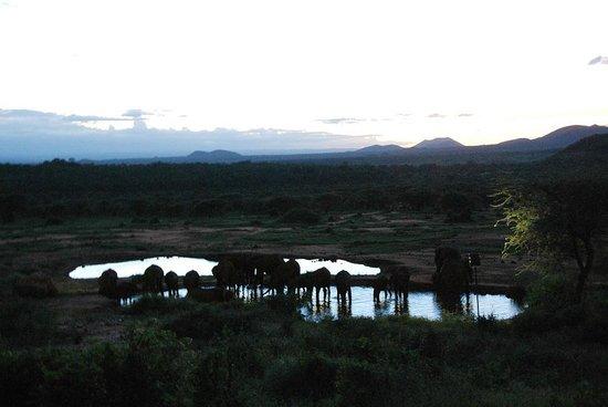 Kilaguni Serena Safari Lodge : Вид на саванну из ресторана отеля_вечер