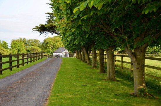 "Adare Irish Cottages: ""Driveway to Cottage"""