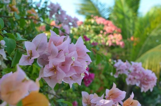 Inn at Grace Bay: beautiful flowers and plants