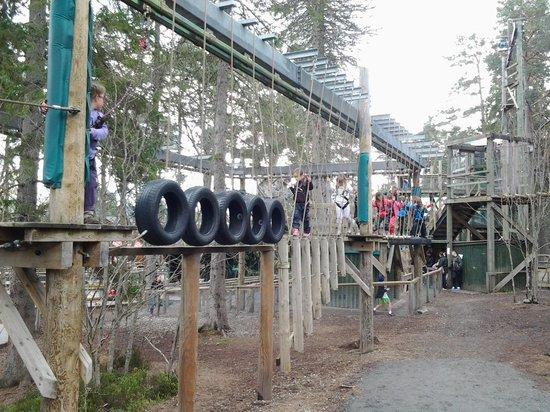 Landmark Forest Adventure Park: tarzan trail