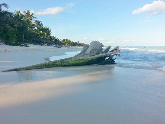 Rosa del Viento: spiaggia