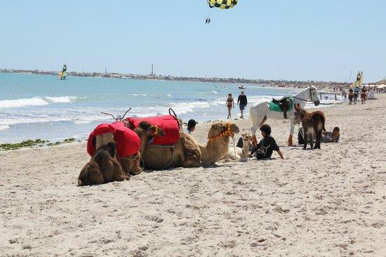 SENTIDO Djerba Beach : les chameaux sur la plage