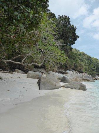 Turtle Sanctuary Beach : turtle beach
