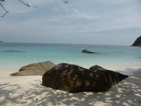 Turtle Sanctuary Beach : aquarium vivant