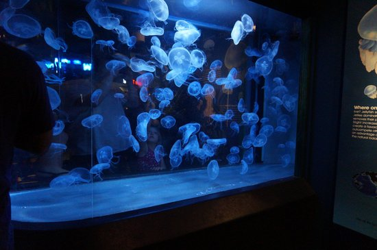 North Carolina Aquarium At Fort Fisher Jellyfish