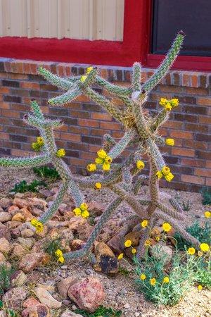 Chiricahua Desert Museum: Cactus
