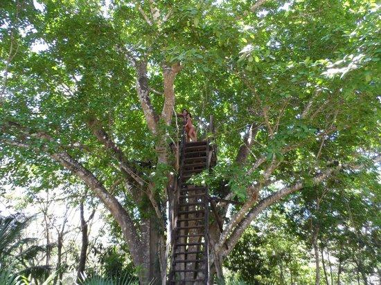 Cenote de 7 bocas : Desde el mirador de un arbol que esta en el centro del cenote. Excelente vista.