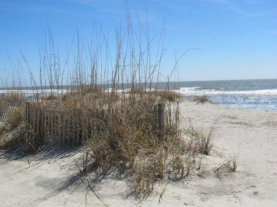Wild Dunes Resort: Beachfront