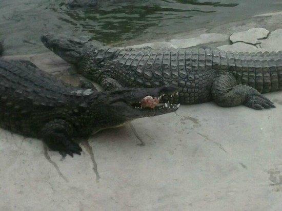 Djerba Explore: pasto dei coccodrilli