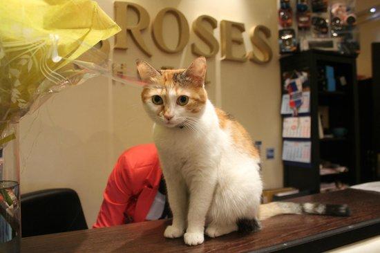 Roses Hotel: Рецепция