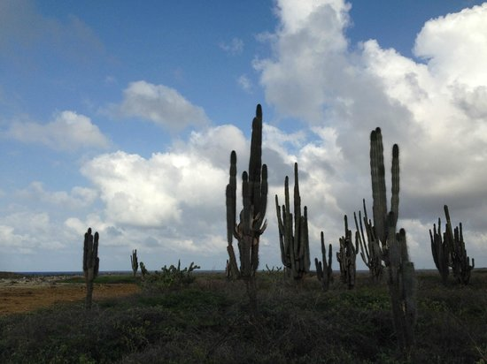 Voyager Bonaire Tours : The rugged windward side of the island was amazing.