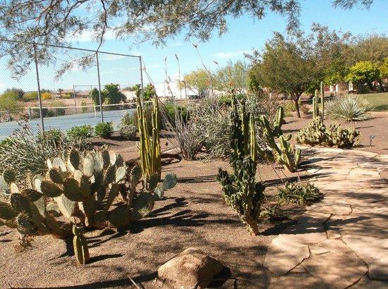 Cibola Vista : Resort desert garden