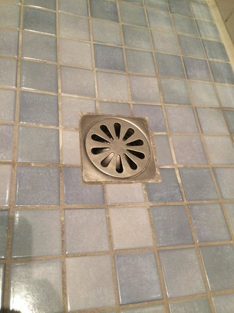 Hotel Aalders: putrid smelling shower drain room 21 groundfloor during my stay :-/