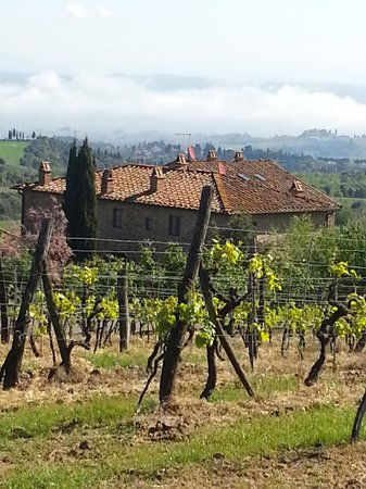 Rigone in Chianti : Rigone hinter Weinreben