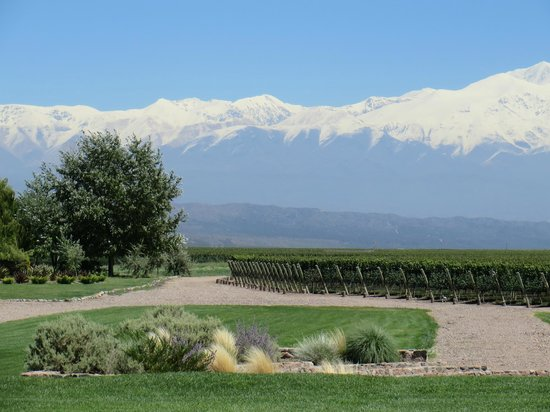 Trout & Wine Tours: Vineyard - Andes backdrop