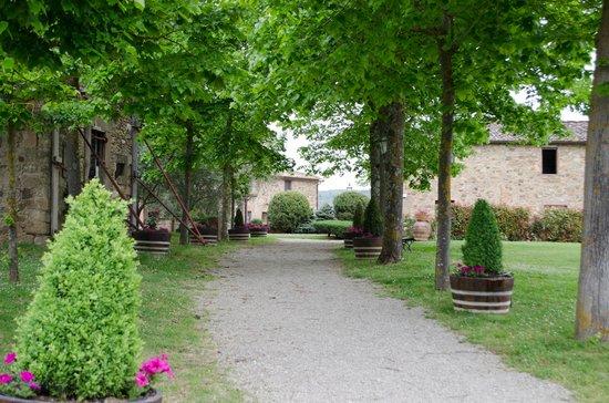 Agriturismo Le Macie: Viale che collega reception al ristorante