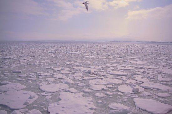 Abashiri Sightseeing Icebreaker Aurora : 鳥