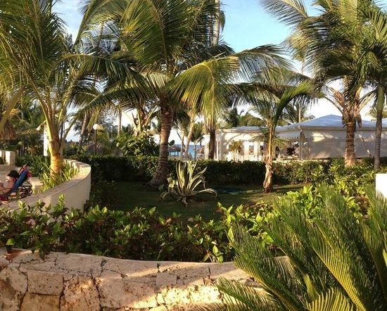 Grand Bahia Principe Punta Cana: palm trees galore