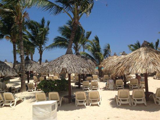 Grand Bahia Principe Punta Cana: one section of beach chairs