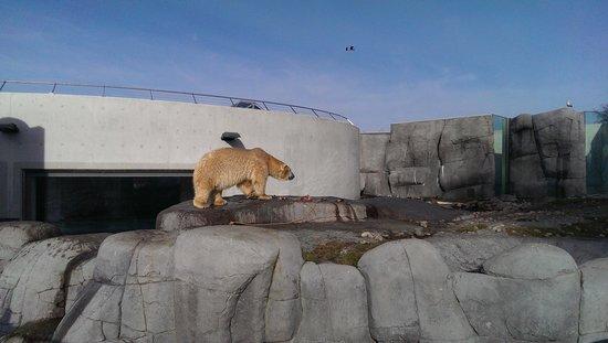 Copenhagen Zoo: Polar bears!