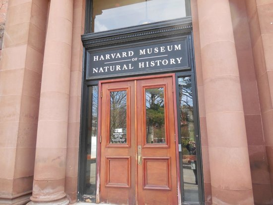 Russell House Tavern: Entrance to Natural History Museum