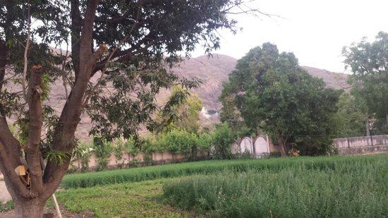 Hotel New Park : farming