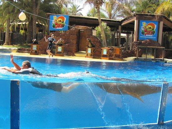 Sea Lion Show - Picture of Oasis Park Fuerteventura, Fuerteventura - TripAdvisor