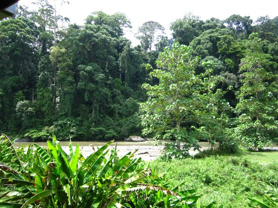 Borneo Rainforest Lodge : View from our balcony