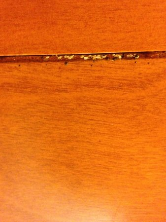 Hampton Inn Louisville Downtown: bed bugs room 619